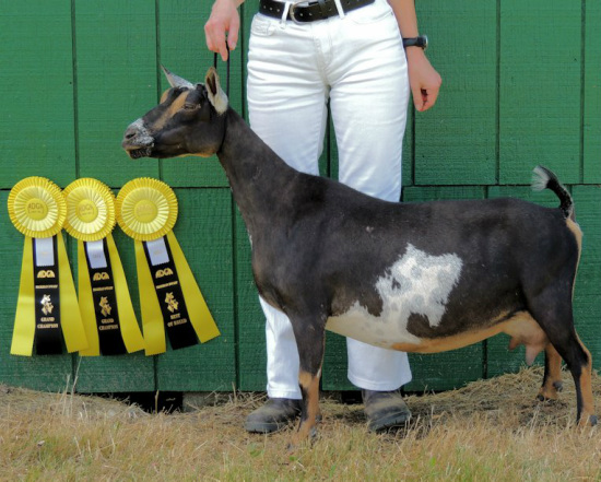 GCH Old Mountain Farm Swift-Leigh